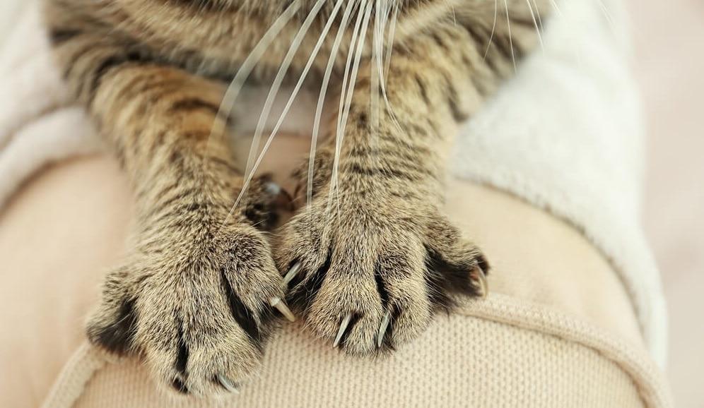 Cat Scratching Proof Furniture
