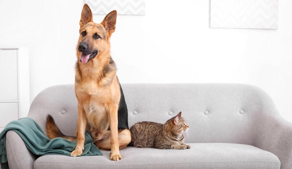 Maintain Pet Friendly furniture Color