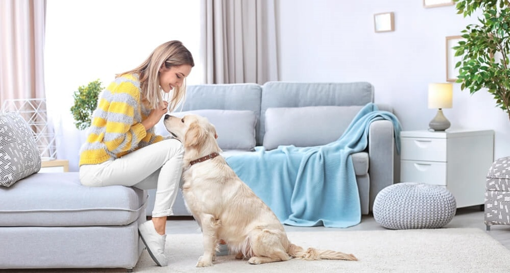 Share Space with Your Pet