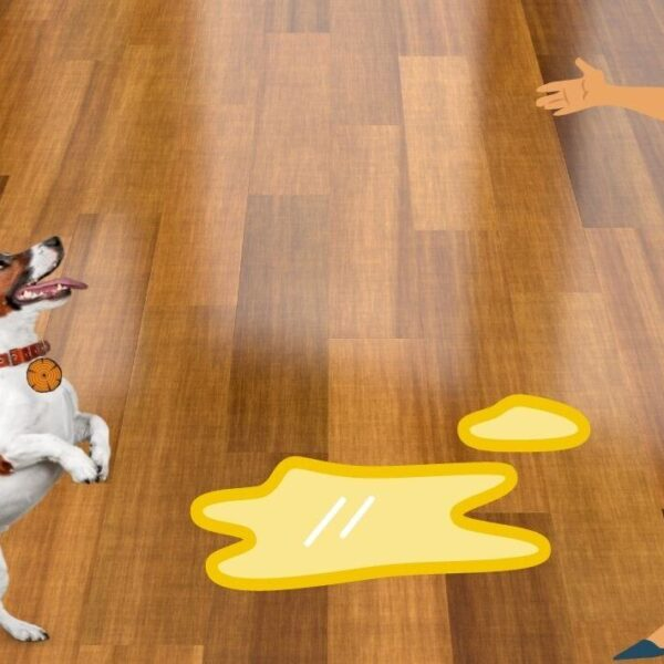 How to Get Dog Urine Out of Wood Furniture: 4 Effortless Solutions
