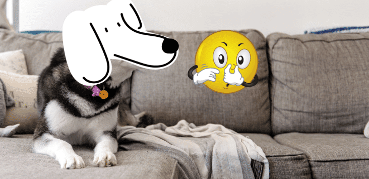 How do You Get Dog Smell Out of Furniture? [4 Usefull Steps to Follow]